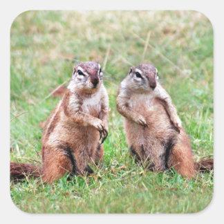 Twin squirrels square sticker