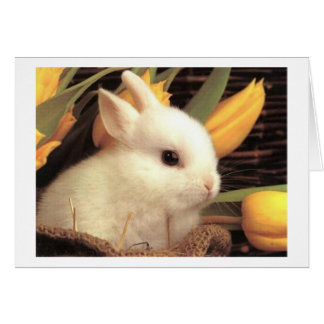 TWIN-THIS BUNNY SAYS HAPPY EASTER CARD