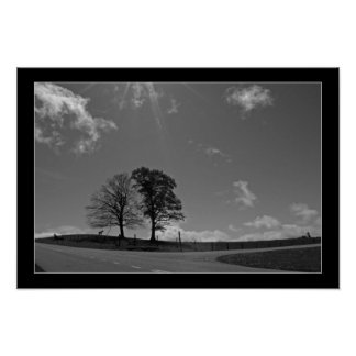 Twin Trees Mountain Meadow Photo Poster