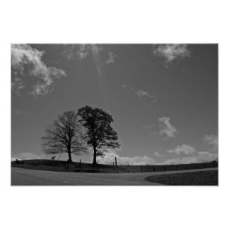 Twin Trees Mountain Meadow Poster