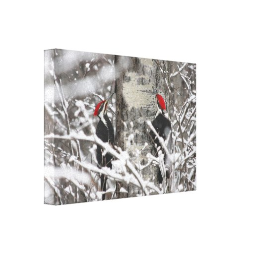 Twin Woodpeckers - Canvas Gallery Wrap Canvas