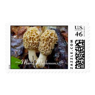 Twin Yellow Morels Morel Mushrooms Postage