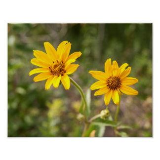 Twin Yellow Sunflowers Mate Poster
