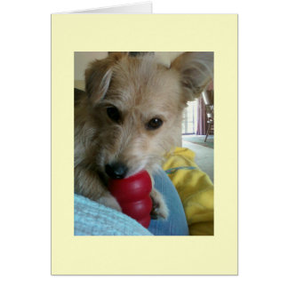 Twinkie the Wonder Dog Card