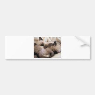Twins Pet Cat Cute Siamese Kitten Car Bumper Sticker