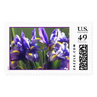 Twirl Iris Photo Stamp
