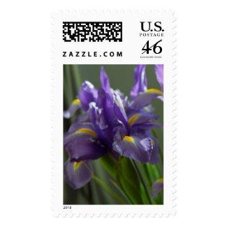 Twirl Purple Irises Flower Postage Stamps