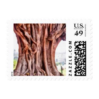 Twisted gnarled trunk.jpg postage stamp