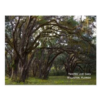 Twisted Live Oaks Postcard