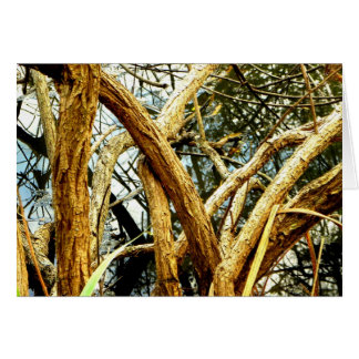 TWISTED OAKS GREETING CARDS