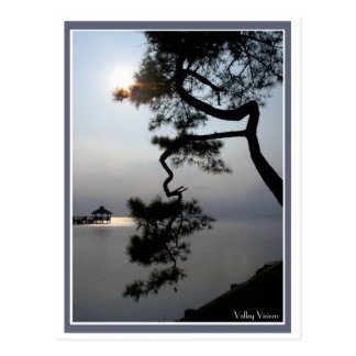 Twisted Pine Postcards