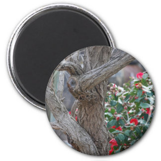 twisted tree 2 inch round magnet