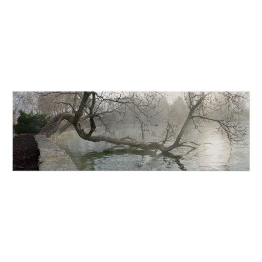 Twisted Tree Over Water Poster