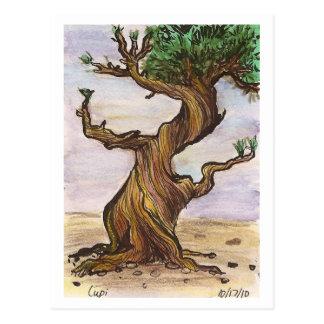Twisted Tree Postcard