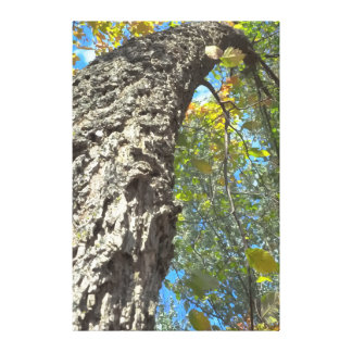 Twisting Tree Nature Canvas Print