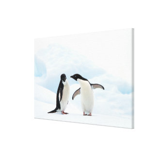 Two Adelie Penguins sitting on a sheet of ice Canvas Print