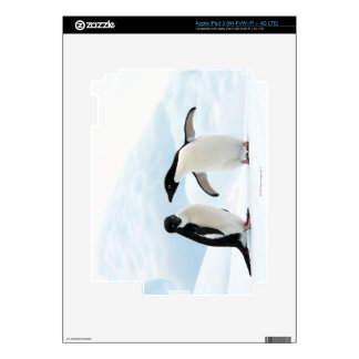 Two Adelie Penguins sitting on a sheet of ice Skins For iPad 3