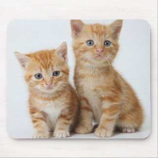 Two Adorable Kittens Mouse Pad
