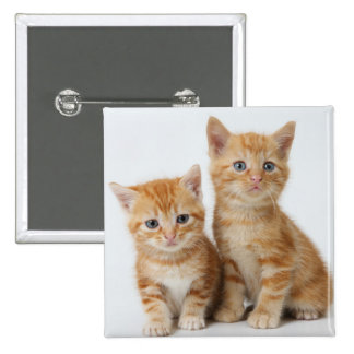 Two Adorable Kittens Pinback Button