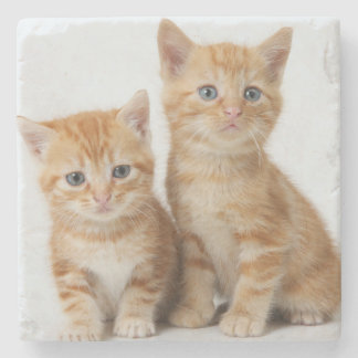 Two Adorable Kittens Stone Coaster