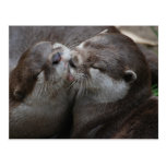 Two Adorable Otters Postcard