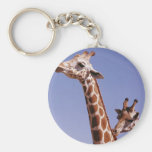 Two Affectionate Giraffes Key Chain