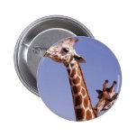Two Affectionate Giraffes Pinback Button