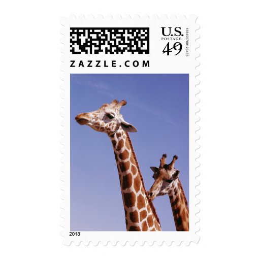 Two Affectionate Giraffes Stamp
