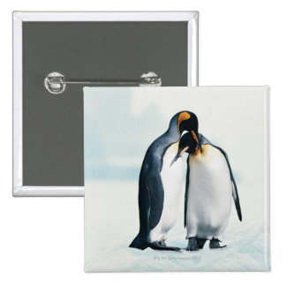 Two affectionate penguins button