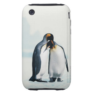 Two affectionate penguins iPhone 3 tough cases