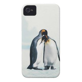 Two affectionate penguins iPhone 4 case