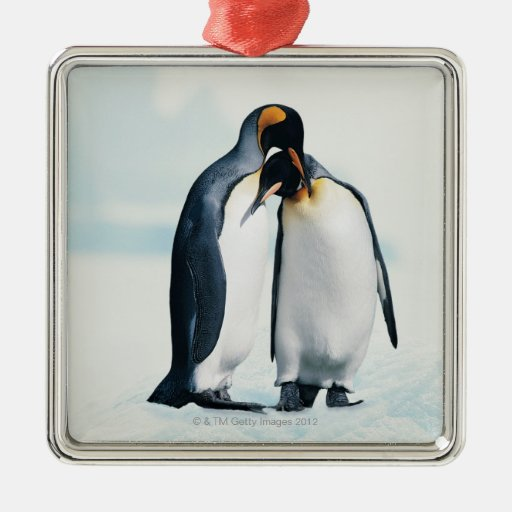 Two affectionate penguins ornament
