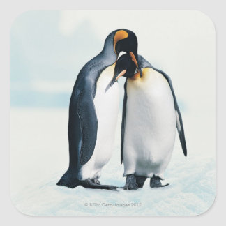 Two affectionate penguins stickers