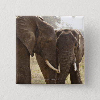 Two African Bush Elephants (Loxodonta Africana) Pinback Button