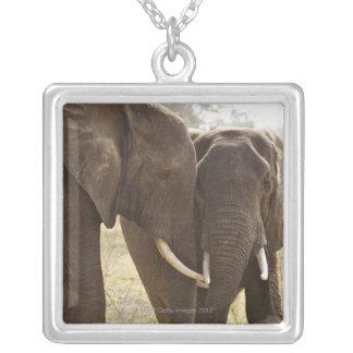 Two African Bush Elephants (Loxodonta Africana) Square Pendant Necklace