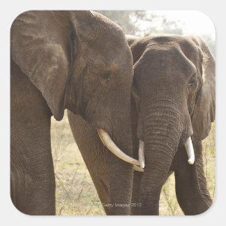 Two African Bush Elephants (Loxodonta Africana) Square Sticker