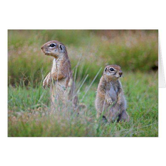 Two alert Ground Squirrels, Jamestown District, Card