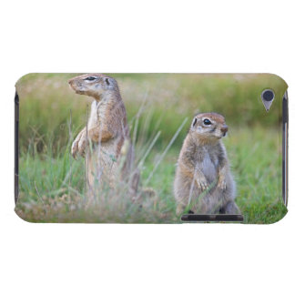 Two alert Ground Squirrels, Jamestown District, iPod Touch Cases