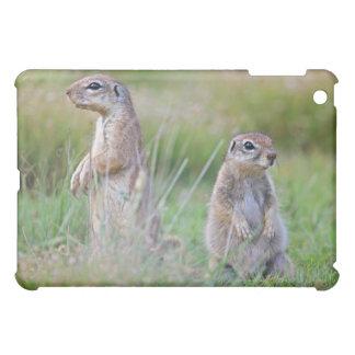 Two alert Ground Squirrels, Jamestown District, iPad Mini Cases