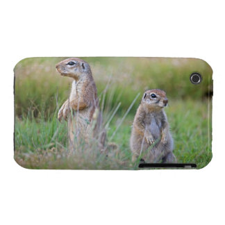 Two alert Ground Squirrels, Jamestown District, iPhone 3 Covers