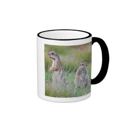 Two alert Ground Squirrels, Jamestown District, Mug