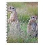 Two alert Ground Squirrels, Jamestown District, Notebook