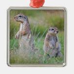 Two alert Ground Squirrels, Jamestown District, Christmas Tree Ornament