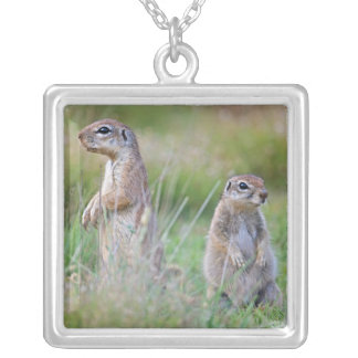 Two alert Ground Squirrels, Jamestown District, Silver Plated Necklace