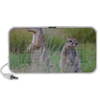Two alert Ground Squirrels, Jamestown District, Notebook Speakers