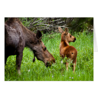 Two Alert Moose Mother And Baby Card