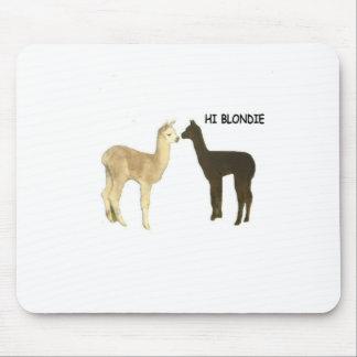 Two alpaca crias meet mousepads