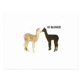 Two alpaca crias meet postcard