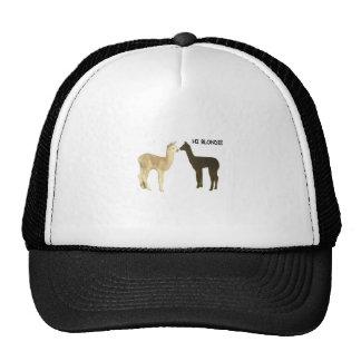 Two alpaca crias meet trucker hat