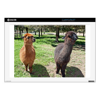 Two Alpacas Take A Stroll On A Sunny Day Skins For Laptops